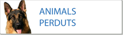 Animals perduts